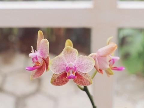 blog orchid